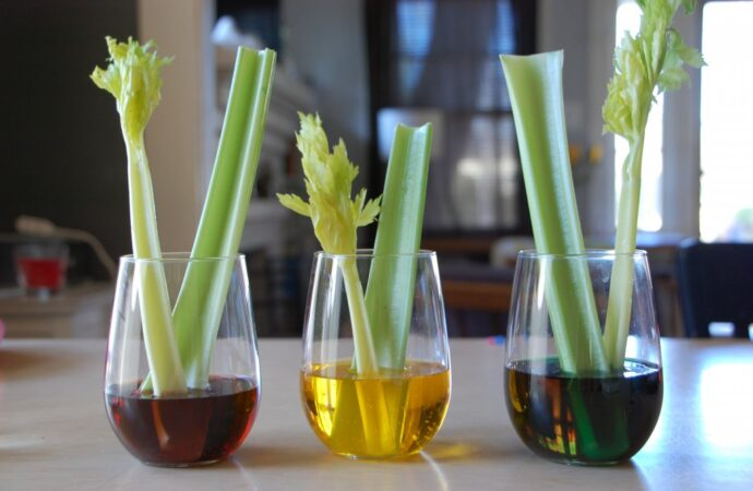 celery in glass containers having color fluid